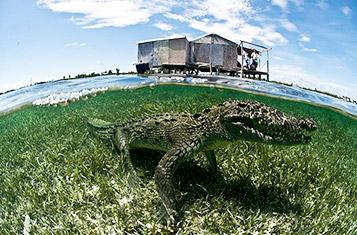 Krokodille Ekspedition
