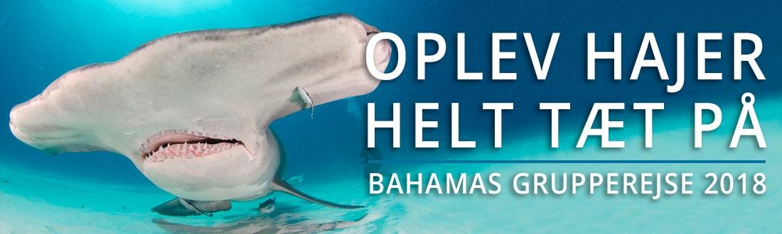 Bahamas grupperejse