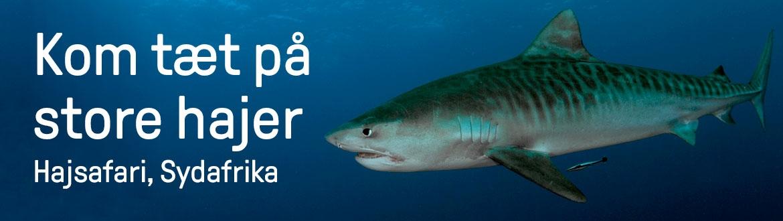 Hajsafari i Sydafrika, grupperejse