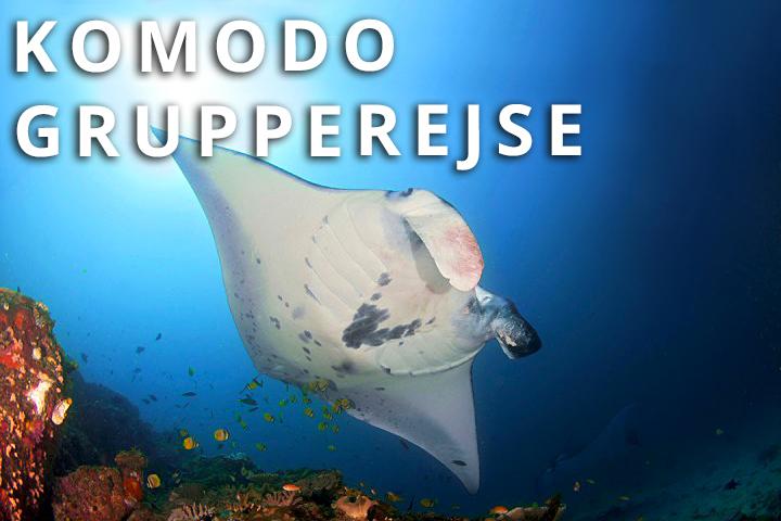 Komodo Grupperejse (Liveaboard)