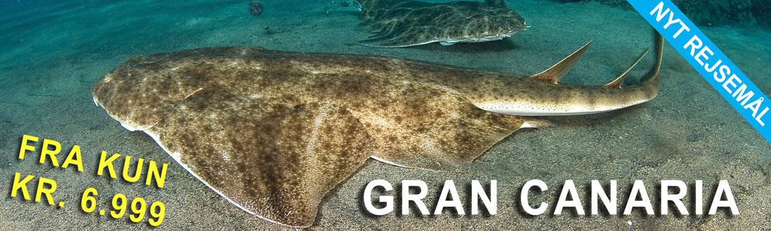 Dykkerrejse til Gran Canaria fra kun 6.999,00 DKK