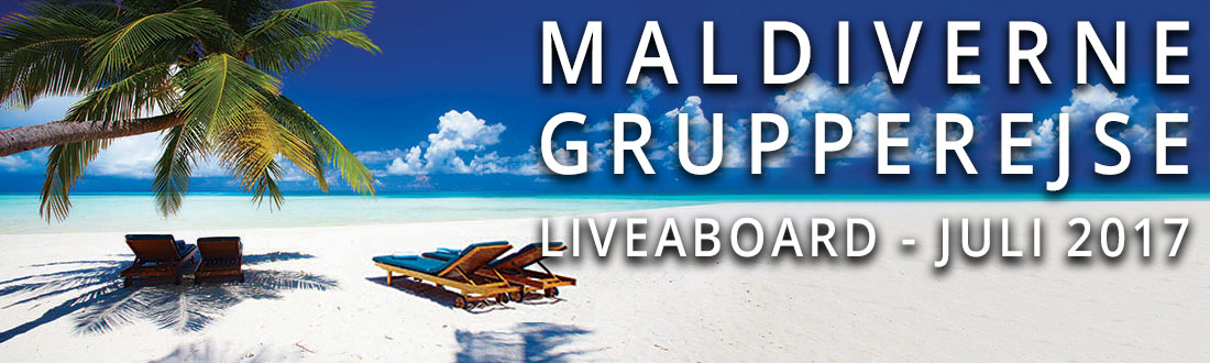 maldiverne grupperejse juli 2017
