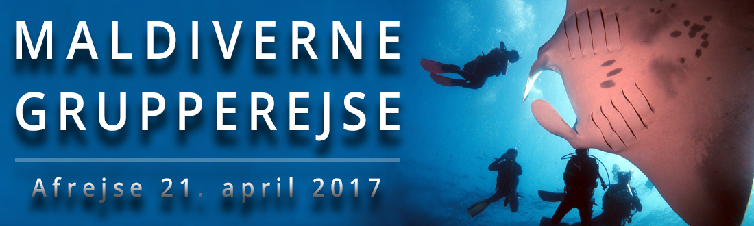 maldiverne-liveaboard-grupperejse-april-2017