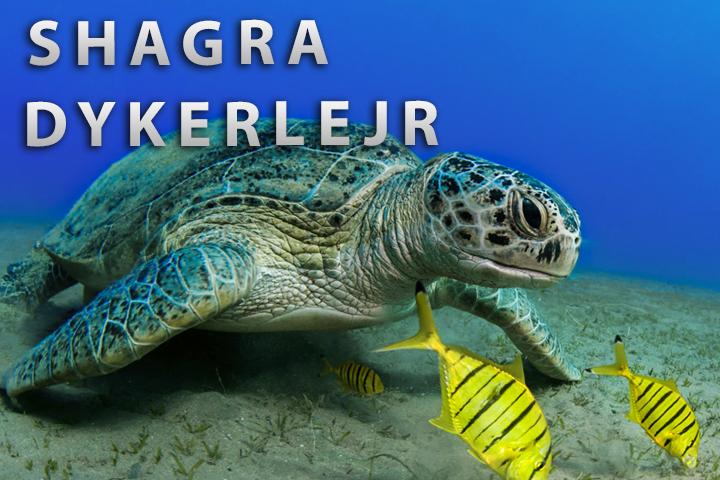 Shagra dykkerlejr
